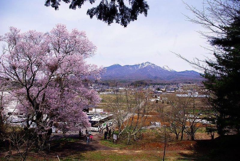 150412_谷戸城桜_八ヶ岳