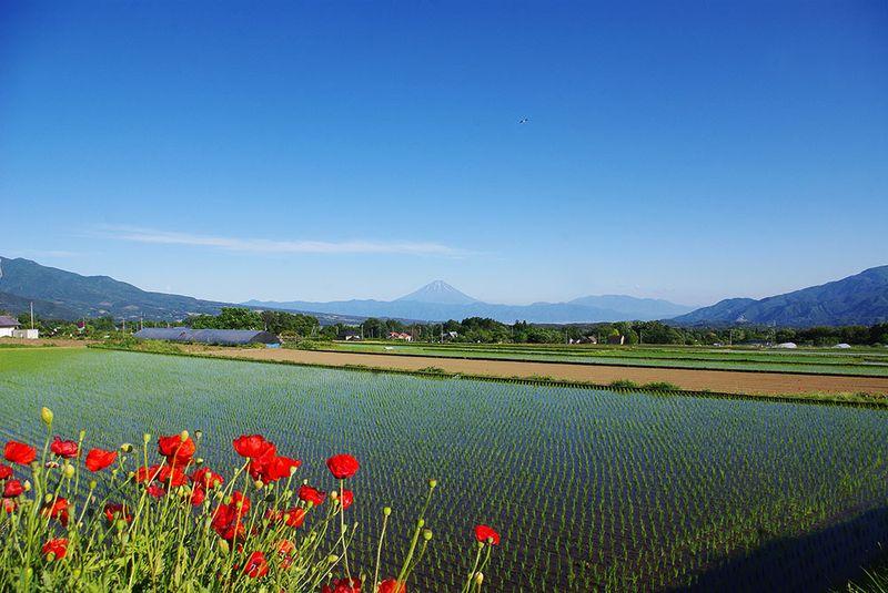 150606_富士山